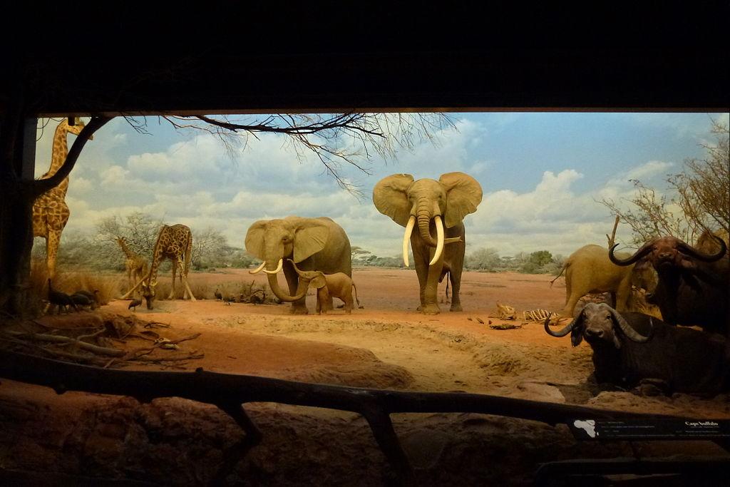 Buffalo Jump Natural History Museum Diorama Photo