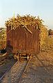 Luxor Narrow Gauge Train R01.jpg