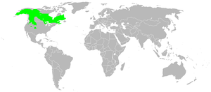 Approximate range of Lynx canadensis (Canadian...