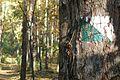 MOs810, WG 2013 21, OChK Baszkow Rochy, trails (2).JPG