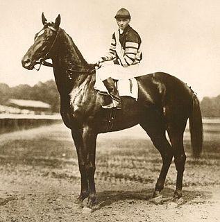 Man o War American Thoroughbred racehorse