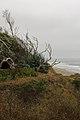 Manresa State Beach windswept.jpg