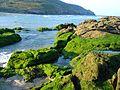 Mar de Fora.jpg