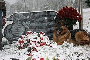 Lex (dog) - Image: Marine K9 Lex at handler's graveside