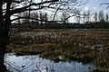 Marston Marshes in flood - geograph.org.uk - 476131.jpg