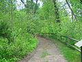 Mason Neck State Park - pathway.jpg