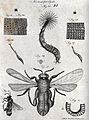 Microscopy; diagrams illustrating insects and parts of insec Wellcome V0024964.jpg