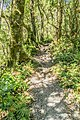 Milford Lookout Track NZ.jpg