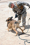 Military Working Dogs training in Baghdad, Iraq DVIDS173891.jpg