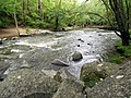 Mill Trail Umstead NC SP 4323 (6641044645) (2).jpg