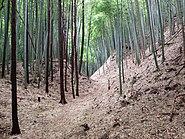 Moat of Takiyama Castle