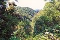 Monteverde Reserve Costa Rica 11.jpg