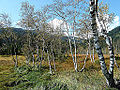 Moorlandschaft am Pass Thurn 02.JPG
