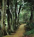 Morne Seychellois NP footpath.jpg