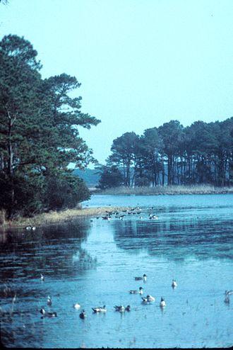 Chincoteague National Wildlife Refuge - Morning view in refuge