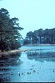 Morning at Chincoteague National Wildlife Refuge.jpg