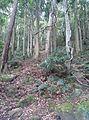 Mount Keira NSW 2500, Australia - panoramio (1).jpg