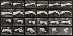 Movement of the hand, a hand drawing a circle. Photogravure Wellcome V0048743.jpg