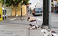 Mr Newman- The World's Saddest Dog is Back (14370765832).jpg