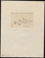 Mugil cephalus - 1700-1880 - Print - Iconographia Zoologica - Special Collections University of Amsterdam - UBA01 IZ13800043.tif