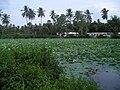 Mutharasanallur1.jpg