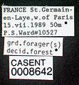 Myrmica ruginodis casent0008642 label 1.jpg