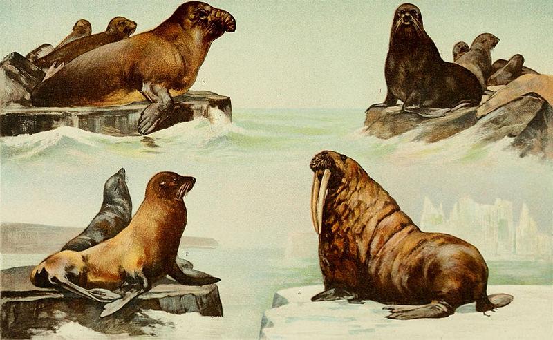 File:NIE 1905 Seal.jpg