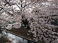 NIkaryo-yosui - panoramio (1).jpg