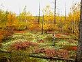 Nadymsky District, Yamalo-Nenets Autonomous Okrug, Russia - panoramio - sssirenko (5).jpg