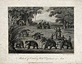 Native Indians catching wild elephants by snaring their feet Wellcome V0021549.jpg