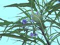 Natura Flora Author Ladislav Kopůnec Univerzon Photo original Law - Czech Republic Nature 158523.jpg