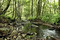 Nature reserve Niva Olšového potoka in summer 2014 (10).JPG