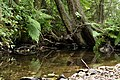 Nature reserve Niva Olšového potoka in summer 2014 (13).JPG
