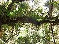 Natureza. - panoramio.jpg