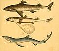Naturgeschichte in Bildern mit erläuterndem Text (Taf. IV) (6058655099).jpg