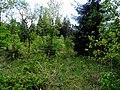 Naturpark Arnsberger Wald fd (23).jpg