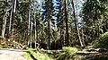 Naturpark Zittauer Gebirge bei Oybin Wanderweg in der Nähe des Kelchsteines.jpg