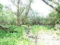 Naturschutzgebiet Heuckenlock 21.05.2014 Phase 110.JPG