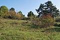 Naturschutzgebiet Heulerberg (4).jpg