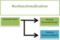 Neofunctionalization after a gene duplication event.png