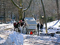 New York. Central Park. Snowy (2797887310).jpg