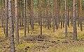Niederlausitz 08-13 img20 Naturpark Schlaubetal.jpg
