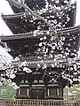 Ninna-ji National Treasure World heritage Kyoto 国宝・世界遺産 仁和寺 京都40.JPG