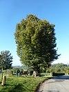 noorbeek-wegkruis aan boom tegenover schey 3 (2)