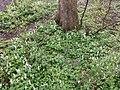Noorderplantsoen Gasthuizen Stinzenflora 22 35 23 598000.jpeg