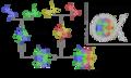 Nukleosoomi struktuur.png