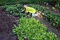 Nursuring salad.jpg