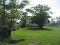 OLoLVioletBackTrees.JPG