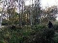 Offenbütteler Moor .jpg