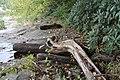 Ohiopyle State Park River Trail - panoramio (38).jpg